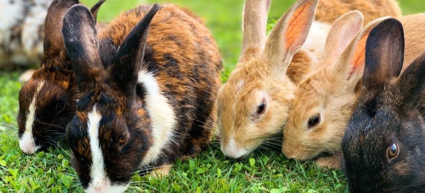 Augmentation record du nombre d'abandon d'animaux cet été